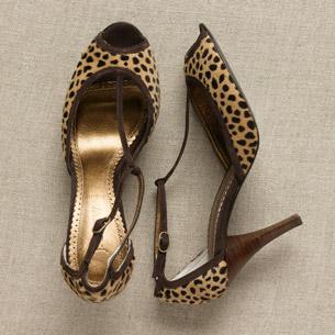 animal shoe