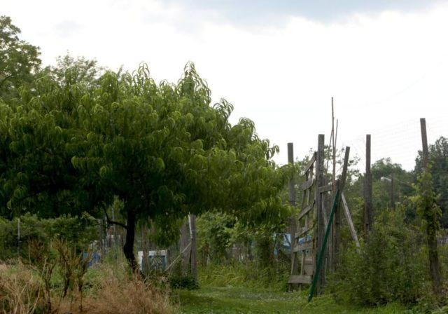 Greenbelt Community Garden