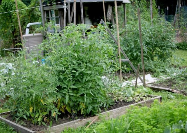 Greenbelt Community Garden Plot