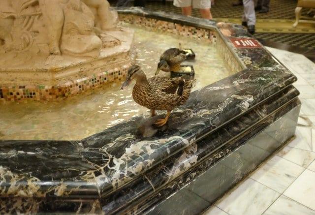 Peabody Ducks - Wardrobe Oxygen