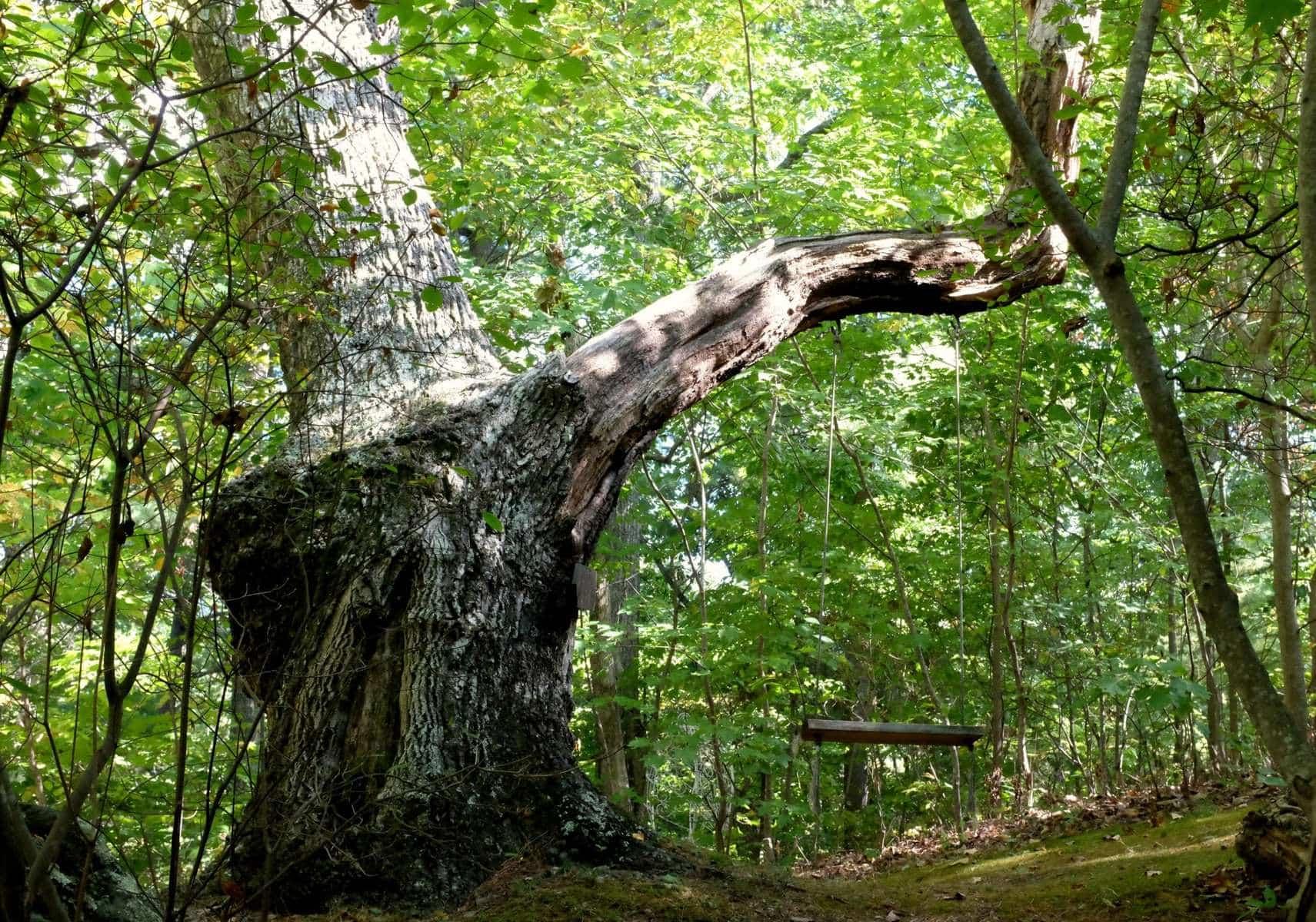 crooked-oak-mountain-inn-tree-swing