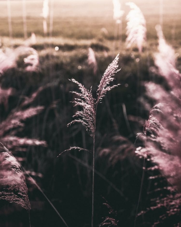 image from rawpixel id 426359 jpeg